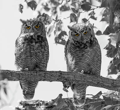 Photograph - Double Owl Bonus - Selective Color by Loree Johnson