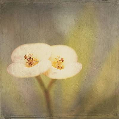 Digital Art - Double Tenderness by Silvia Marcoschamer
