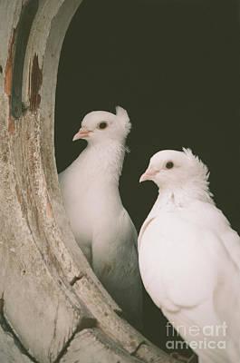 Photograph - A Pair Of Doves by Jelena Jovanovic