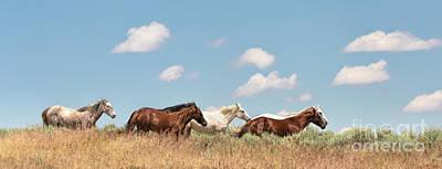 Photograph - Down The High Prairie by Jim Garrison