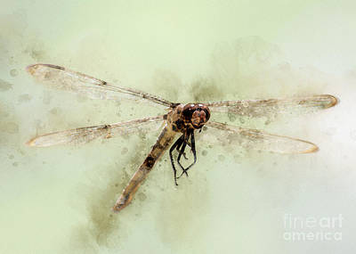 Roaring Red - Dragonfly by Anthony Ellis