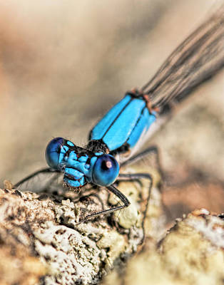 Moody Trees Rights Managed Images - Dragonfly Close-up Royalty-Free Image by Francis Sullivan
