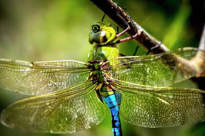 Photograph - Dragonfly Closeup by David Morefield