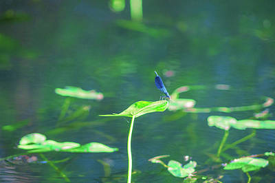 Photograph - Dragonfly In The Spreewald by Sun Travels