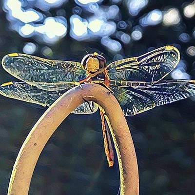 Digital Art - Dragonfly In The Sun  by Cindy Greenstein