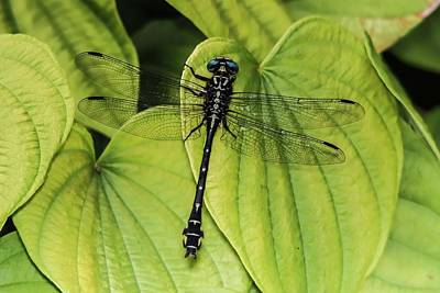 Lake Life - Dragonfly on Heart-shaped Leaves by Marlin and Laura Hum