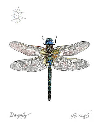 Drawing - DragonFly by Peter Farago