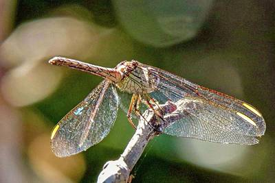 Photograph - Dragonfly by Susan Rydberg