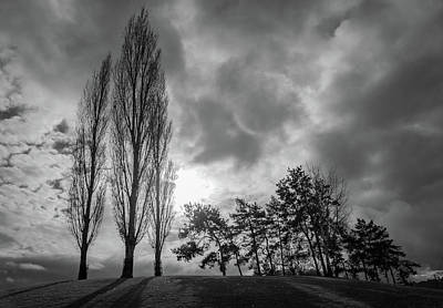 Photograph - Dramatic Fall Trees by Dave Matchett