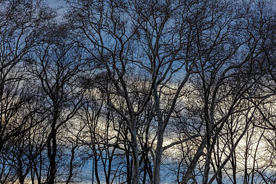 Photograph - Dramatic Trees Sky And Clouds by Robert Ullmann