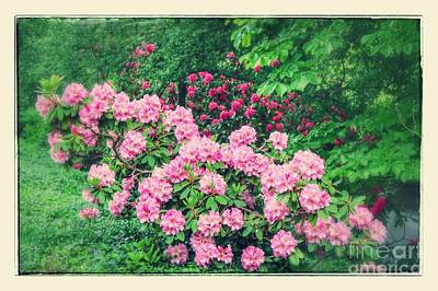 Photograph - Dreaming Of Rhododendrons by Carol Groenen