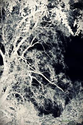 Surrealism Royalty-Free and Rights-Managed Images - Dreaming Trees 2 by Sarah Loft
