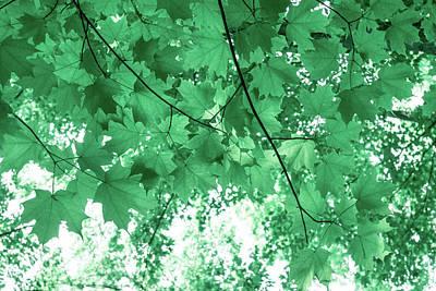 Travel - Dreams of Summer in Paolo Veronese Green by Georgia Mizuleva