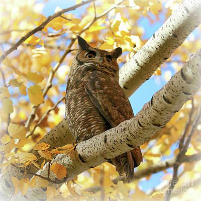 Photograph - Dreamy Autumn Owl by Carol Groenen