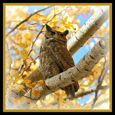 Photograph - Dreamy Autumn Owl Square With Border by Carol Groenen