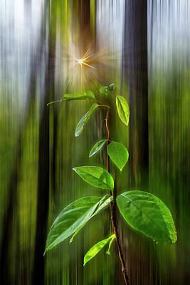 Photograph - Dreamy Green by Debra and Dave Vanderlaan