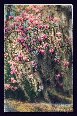Photograph - Dreamy Saucer Magnolia Tree With Textures And Border by Carol Groenen