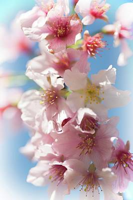 Photograph - Dreamy Spring Blossoms by Lynn Bauer