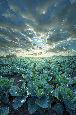 Photograph - Dressed Up In Green by Phil Koch