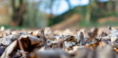 Photograph - Dried Leaves On The Ground by Scott Lyons