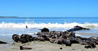 Photograph - Drift Wood And Sea by Joan Stratton