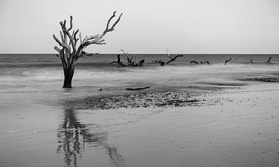 Photograph - Driftwood And Washed Out Trees At The Beach On Hunting Island  by Alex Grichenko