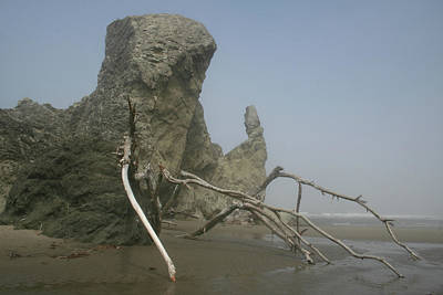 Photograph - Driftwood Crawl II by Dylan Punke