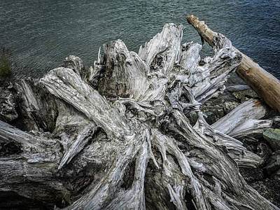 Photograph - Driftwood by Mark Duehmig