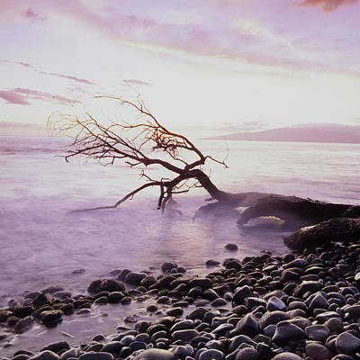 Driftwood Beach Fog Wall Art - Photograph - Driftwood On A Rock Beach In The Morning by Brian Caissie