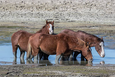 Photograph - Drinking Buddies by Belinda Greb