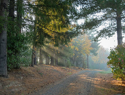 Photograph - Driveway Morning Light by Jean Noren