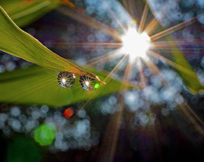 Photograph - Drops Of Light by John Rodrigues
