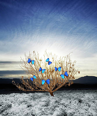Photograph - Dry Bush With Butterflies Alighted by Thomas Northcut