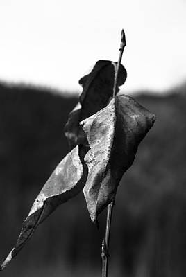 Photograph - Dry Leaves by Yulia Kazansky