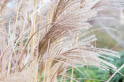 Photograph -  Dry Reed Natural Pattern by Marina Usmanskaya