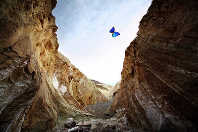 Butterfly Photograph - Dry River Bed And High Walls With by Thomas Northcut