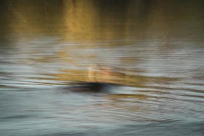 Photograph - Duck by Dalibor Hanzal