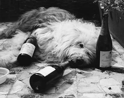 Dulux Dog Drunk Art Print by Michael Webb