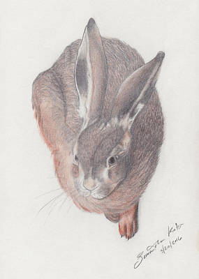 Durer Bunny Study Original