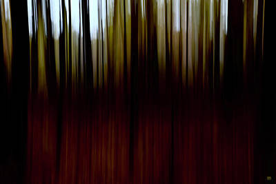 Photograph - Dusk In The Woods by John Meader