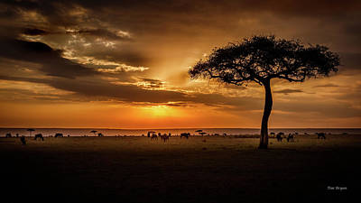 Photograph - Dusk Light Over Wildebeest  by Tim Bryan
