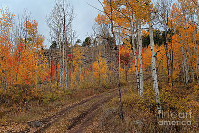 Photograph - Dusky Road by Jim Garrison