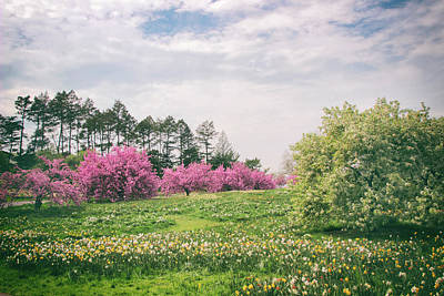 Photograph -  Cherry Trees On A Hill by Jessica Jenney
