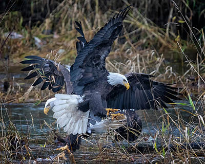 Photograph - Eagle Dance by Randy Hall