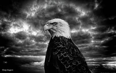 Photograph - Eagle Glare by Wesley Nesbitt