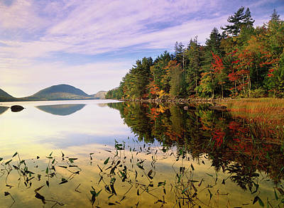 Eagle Photograph - Eagle Lake, Mount Desert Island, Acadia by Tim Fitzharris/ Minden Pictures