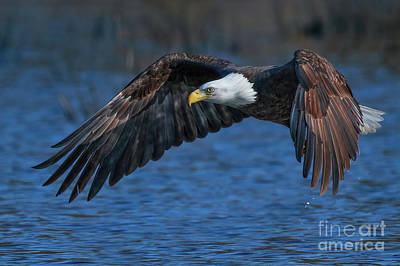 Photograph - Eagle On Blue by Beth Sargent