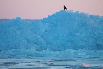 Photograph - Eagle On Ice Mackinaw City 2261803 by Rick Veldman