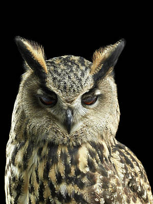 Eyes Closed Photograph - Eagle Owl Close Up With His Eyes by Michael Blann