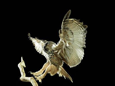 Branch Photograph - Eagle Owl Landing On A Branch by Michael Blann